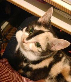 ギターが弾けません。猫が乗っているからです。(←おろせ)