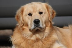 """This exact Golden would be """"My Best Friend""""."""