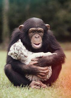 Image credits: Bary Bland  #petmission #amorentreespecies