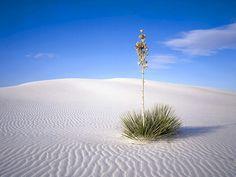 白い砂の上に 砂漠 自然 高解像度で壁紙