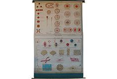 Vintage Rolldown Jurica Biology Chart