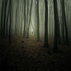 misty, haunting, so lovely Misty Forest, Pine Forest, Foggy Forest, Creepy Woods, Spooky Woods, Haunted Woods, Dark Father, Sad Pictures, Walk In The Woods