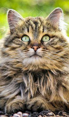 http://www.pinterest.com/Daphnekjames/cats-cats-cats/ CATS .