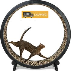 High energy cats need a safe place to run and expend pent up energy. This Cat Exercise Wheel is the ultimate feline toy! Puppy Training Guide, Puppy Training Schedule, Cat Exercise Wheel, Mean Cat, Cat Run, Cat Jokes, Dog Training Techniques, Cats For Sale, Pet Accessories
