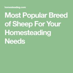 Most Popular Breed of Sheep For Your Homesteading Needs