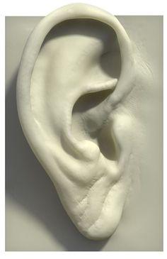 External ear anatomy An older ear. Face Anatomy, Anatomy Drawing, Anatomy Art, Human Anatomy, Sculpture Head, Pottery Sculpture, Anatomy Sculpture, Sculpture Techniques, Drawing Techniques
