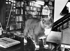 "Oops watches over the Antiquarium Bookstore from atop a TV in June 1989. Antiquarium owner Tom Rudloff said cats go naturally with the relaxed feel of the Old Market bookstore. ""They just do whatever they want,"" he said. ""They very often lie on top of the counter and elicit comments from the customers. There are a lot of cat lovers in the world."" THE WORLD-HERALD"