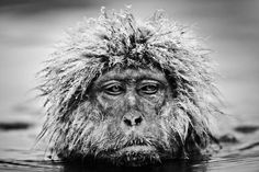 Grumpy Monkey | From a unique collection of black and white photography at https://www.1stdibs.com/art/photography/black-white-photography/