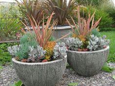 Phormium 'Flamingo,' growing with Sedum nussbaumeranum,  Senecio 'Kilimanjaro' and Kalanchoe pumila 'Dwarf Blue'... container tips by Bob Hyland