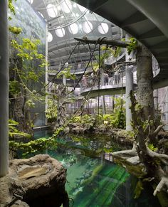 Interior da Academia de Ciências, São Francisco, Califórnia