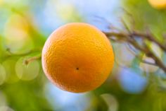 Orange from Douliana