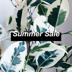 Few days before our summer break we are giving you discount code. Use: ENDLESSSUMMER during checkout. Check our illustrated paper coasters, inspirational quote posters, typographic prints, sea… Quote Posters, Summer Sale, Pop Art, Coasters, Plant Leaves, Inspirational, Sea, Paper, Illustration