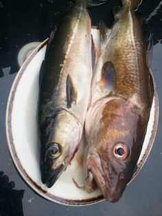 Demetrius caught a cod and a coley on first North Sea kayak fishing trip of season by Karen V Bryan, via Flickr