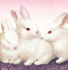 RABBIT by ~umedama on deviantART