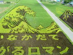 15 Insane Works Of Japanese Rice Field Art