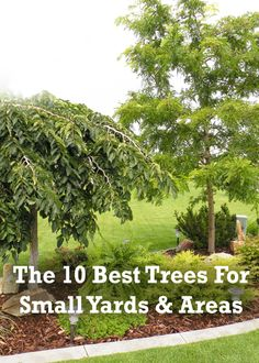 Here is a look into what might be good for a smaller yard.  Most of these trees have really pretty colors and grow to be about 20-30 feet in height.