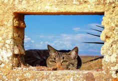 De um  buraco___se fez janela