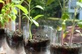 DIY Self-Watering Seed Starter Pots - Finished Self-Watering Seed Starter Pots Diy Planters, Flower Planters, Fall Vegetables To Plant, Plastic Bottle Planter, Plastic Bottles, Self Watering Plants, Diy Herb Garden, Starting Seeds Indoors, Plantar