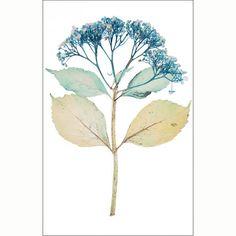 Nick Knight: Flora