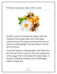 Primary Science: Bee Life Cycle - Mr Greg's English Cloud
