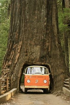 The Red Wood Forests in Cali... You know this reminded you of something.. Love it