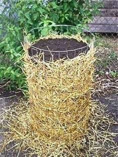 A simple way to grow potatoes  Straw, wire fencing and soil