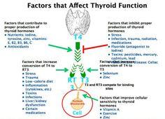 Factors+that+affect+thyroid+function