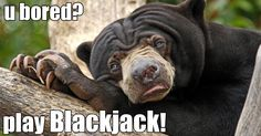 yes I am so bored I think I will put the fire. Out that's burning down my house the play Blackjack! Bear Pictures, Funny Dog Pictures, Free Pictures, Animal Pictures, Funny Dogs, Funny Animals, Cute Animals, Crazy Animals, Photo Humour