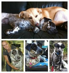 Abby and Clover became close friends with their new family. Abby overcame her shyness and Clover had a leg surgery.