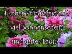 Liebe #Grüße zu Pfingsten 🍃🌸🍃 von mir 😍 Ich wünsche dir einen zauberhaften Tag💕 - YouTube