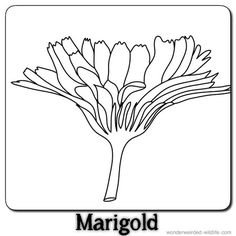 13 best flowers images on pinterest flower names names of flowers marigold lineart outline of marigold flower head 8 black and white marigold template with the label mightylinksfo