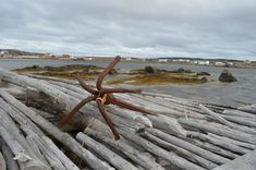 A Time in Tilting - Innside Fogo Island - CBC Newfoundland & Labrador Fogo Island Inn, Old Window Panes, Flat Rock, Newfoundland And Labrador, Island Tour, Fishing Villages, Summer Travel, Far Away, The Locals