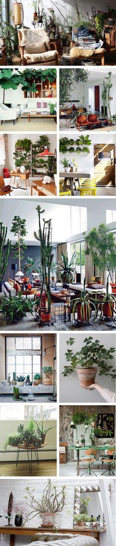 INDOOR PLANTS PONYRIDER