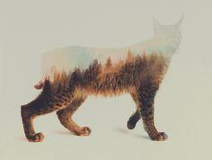 Norwegian Woods: The Lynx Art Print by Andreas Lie