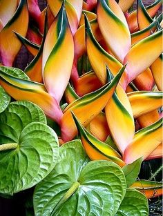 Heliconia and Anthur Flowers   Shake Your Tail Feather Inspiration