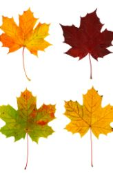 Science in leaves. Great website for finding a plethora of science projects for all ages.
