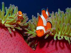 beautiful underwater Wakatobi, Indonesia