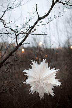 Oslo 60 vit Paper Stars, Oslo, Winter, Holiday, Flowers, Plants, Origami, Christmas Ideas, Decor
