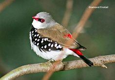 Related image Australia Animals, Bird Feathers, Old World, Old Things, Tropical, Birds, Image, Australian Animals, Bird