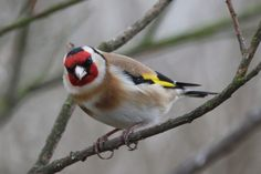 Nyjer seed and sunflower hearts are one of goldfinches favourite treats, so if you fancy going for gold in your garden, then seed feeders are one of the easiest things you can do! #homesfornature