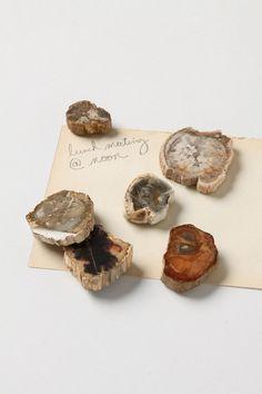 Petrified Wood Magnets - Anthropologie.com