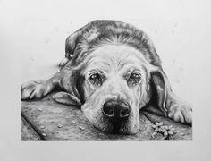 My drawing of Musashi the Japanese dog