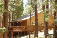 The Redwoods In Yosemite - (47R) Altitude Adjustment photo