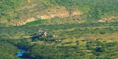 A look at the Eastern Cape's safari offering - South African Tourism Update River Lodge, Private Games, Local Tour, Game Reserve, Tour Operator, South Africa, Grand Canyon, Safari, Cape