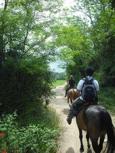 #tuscany #horses #wineyards