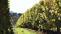 The Vineyards at Croot Constantia