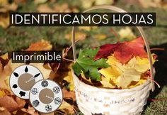 imprimible gratis para identificar y describir hojas: forma, margen y venación. Actividades educativas para descubrir y estudiar la naturaleza