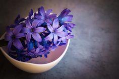 ヒヤシンス, 花, バイオレット, クローズ, 春の花, 香りの花, デコ, 早く, 香り高い, 青い花