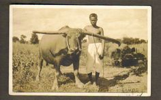 PHILIPPINE ISLANDS ~ YOUNG MAN & WATER BUFFALO ~ REAL PHOTO RPPC ~ c. 1910's Water Buffalo, Young Man, Islands, Rice, Painting, Painting Art, Youth, Paintings, Painted Canvas