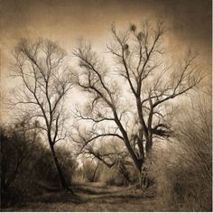 Trademark Fine Art Sepia Ghost Canvas Art by Philippe Sainte-Laudy, Size: 24 x 24